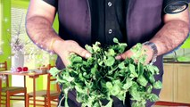 How to Grow Mint from cutting II All ALL About Growing Mint II पुदीना के पौधे को आसानी से कैसे लगायें    How to grow mint easily    Mint Farming    DIY mint Growing    Pudina Growing    Mint Plantation