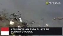 Tiga buaya muncul di Sungai Grogol! - TomoNews