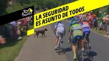 Tour de France 2018 - Seguridad de los ciclistas