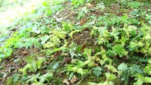 Dolu yağışı, fındık bahçelerinde zarara neden oldu - SAKARYA
