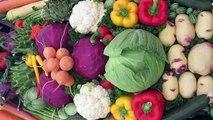 July Vegetables ||  जुलाई में लगाये जाने वाली सब्जियाँ || Grow Fresh Vegetables II Vegetables that grows from seeds in July II Best Vegetables for July II  Vegetables for Monsoon II Kitchen garden vegetables for July