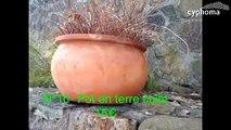 vide jardin plantes en pot / jarreInfos et contact en cliquant sur >> cypho.ma/vide-jardin-plantes-en-pot-jarre