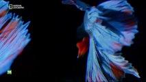 Nuestro planeta, episodio 5 - La vida y la muerte (One Strange Rock) con Will Smith