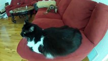 Funny monkey and cat so cool can't stop launght