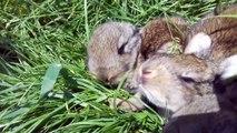 Cute Baby Bunnies 2 Weeks Old Amazing Little Babies Rabbits Video