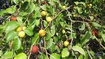 गमले में लगने वाले फलों के पौधे || Fruits that can Grow in Pot/Container || गमले में लगने वाले फलों के पौधे || Container Growing Fruits || Best Plant for Containers || Fruit Plants for Container || Easy to grow Fruit plant in Home Garden