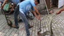 Massive rock python rescued by forest officials in Assam, India | Oneindia News