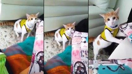 Un chat célèbre un but