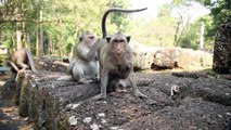 Lovely funny cute baby monkey is in the monkey family
