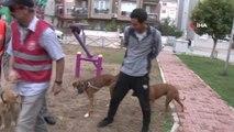 Çocuk Parkında Patileri Kesilerek Köpeği Öldüreni İhbar Edene Para Ödülü