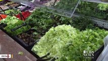 CDC Urges Consumers To Not Eat Romaine Lettuce In Wake Of E. Coli Outbreak