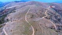 Bin 500 metrede, 6 bin dekar orman alanını nakış nakış böyle işlediler