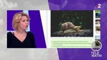 Les escargots pour détecter la pollution