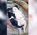 Une chèvre aux Philippines donne naissance à une étrange créature
