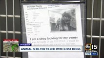 Valley animal shelters filled with runaway dogs due to fireworks