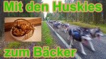 Mit den Huskies zum Bäcker / Hundetraining / Zughundesport / Nature Trails / Husky Hof / Husky Tour