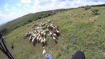 Herding Sheep Or Paragliding Fail?