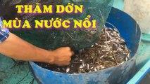 Thăm dớn (giến) bắt cá đồng mùa nước nổi ở miền Tây | Đăng dớn bắt cá mùa nước lũ