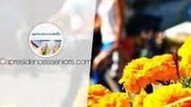 Investir à LA ROCHELLE : appartement T3 en Résidence Services Seniors