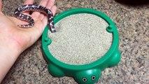 Ce petit serpent joue dans son bac à sable et c'est trop mignon