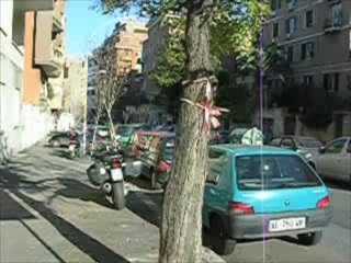 Uno Yak sull'albero