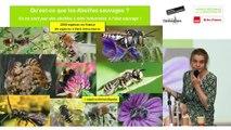 """Table ronde """"Pratiques culturales de l'agriculture urbaine et impact sur la biodiversité : le cas de l'apiculture en ville et des relations avec les pollinisateurs sauvages"""""""
