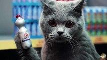 Netto Katzen - Der Netto Katzen Song (Original)