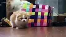 Cute Kittens  Cute and Funny Kittens Playing Funny Pets