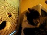 Le chat et la Souris (suite...)