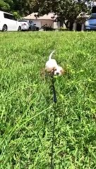 Too cute - this baby dog ​​galley in the tall grass!