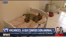 Savez-vous à qui confier votre animal pendant vos vacances ?