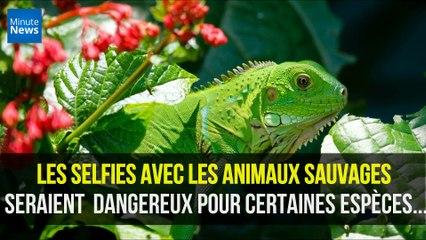 Les selfies avec les animaux sauvages seraient très dangereux pour certaines espèces...