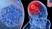 Genetically modified polio virus used to treat brain cancer