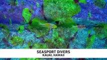 Readers Choice 2018 - Seasport Divers