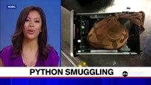 TSA agents find python hidden in hard drive
