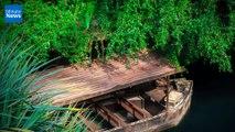 Le plus grand projet de reforestation au monde a vu le jour au Brésil