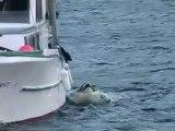 Une orque veut faire un bisou à un chien sur un bateau