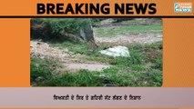 ਪਟਿਆਲਾ ਦੇ ਹੀਰਾ ਬਾਗ ਨੇੜੇ ਨਦੀ ਦੇ ਕਿਨਾਰੇ ਮਿਲੀ ਵਿਅਕਤੀ ਦੀ ਲਾਸ਼ Dead Body Recovered in Patiala