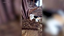 Cats and Kittens Funny Cats and Kittens Together Part 1 Funny Pets
