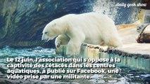 Une pétition pour libérer un ours polaire du Marine Land d'Antibes