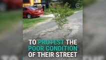 People Are Planting Trees In Potholes