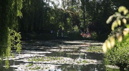 Jardin d'Exception : Découvrez le Jardin d'Eau de la Fondation Claude Monet