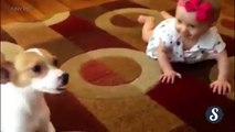 Funny Dogs   Pet Dogs Being Funny Part 1 Funny Pets