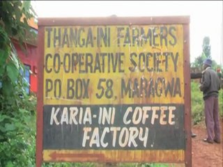 Muranga Coffee Row