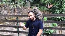Sacred monkey forest Bali!