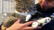 O destino do gatinho abandonado que mudou, quando um homem descobriu o que ele tinha em suas Patas