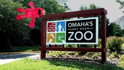 Elmo Helps Find Kermit The Frog At The Zoo!