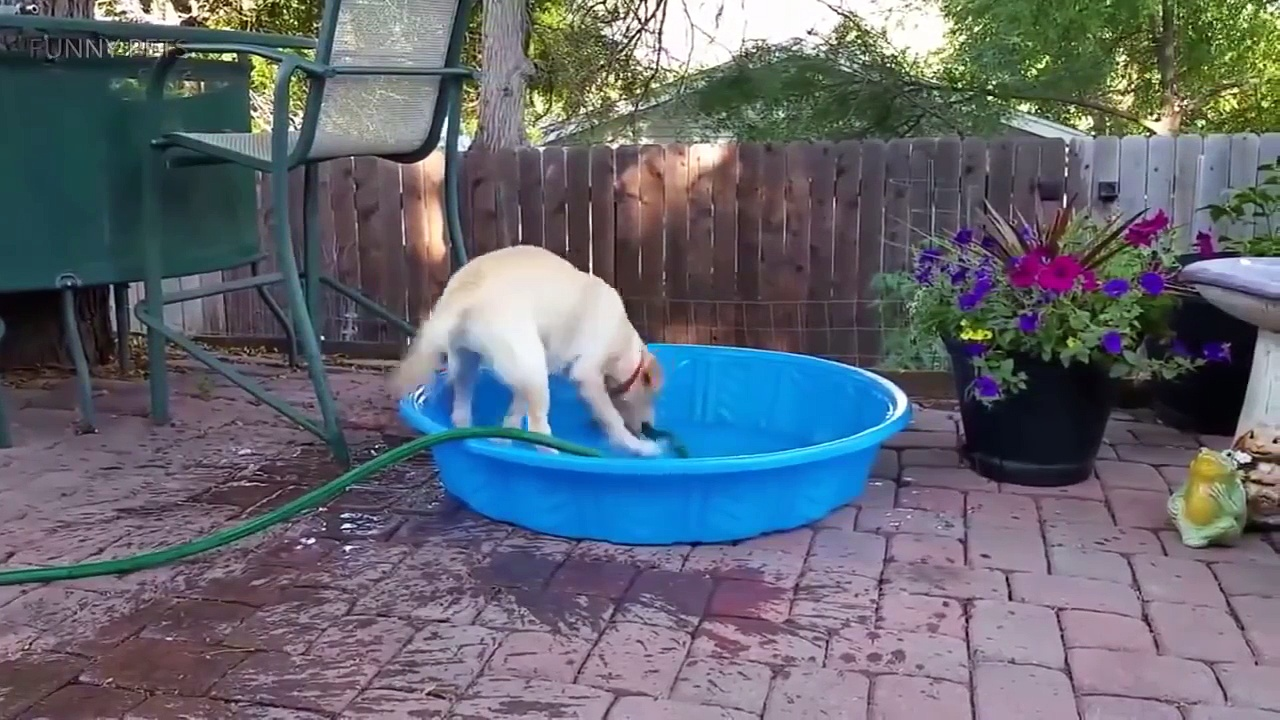 Cute Pets  Cute Dogs Doing Funny Things Part 2 Funny Pets