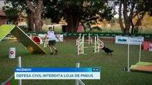 GR - Exercícios para cães: Diversão contra o estresse dos animais - 20-06-2018