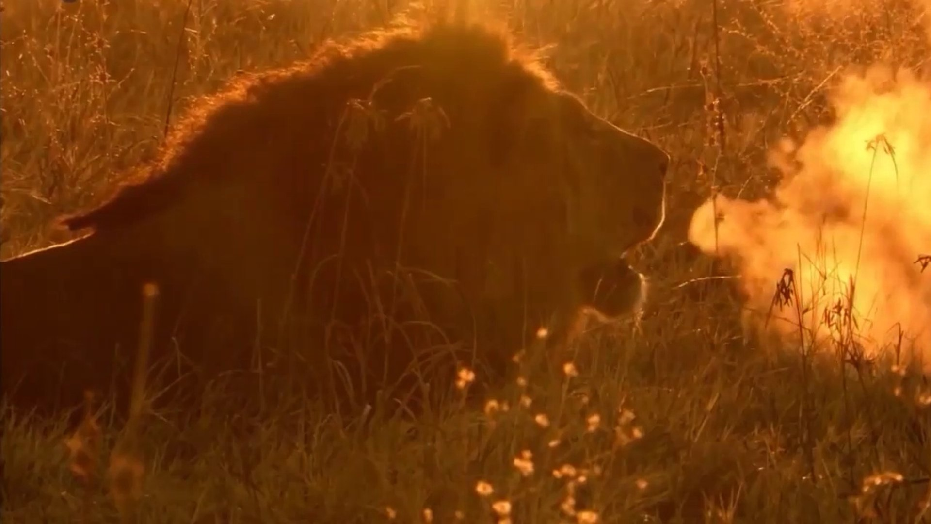 National Geographic Animals - Africa's Creative Killers Part 2 - Lions and Leopards